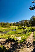 The view along the John Muir Trail at Rosemarie Meadow and the West Fork of Bear Creek, John Muir Wilderness, Sierra National Forest, Sierra Nevada Mountains, California, USA.