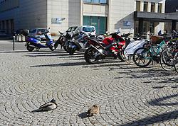 Germany, Freiburg  - March 28, 2019.A couple of ducks pauses (making a nap) in front of the Deutsche Bank (Credit Image: © Antonio Pisacreta/Ropi via ZUMA Press)