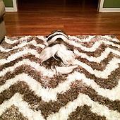 Camouflaged dog