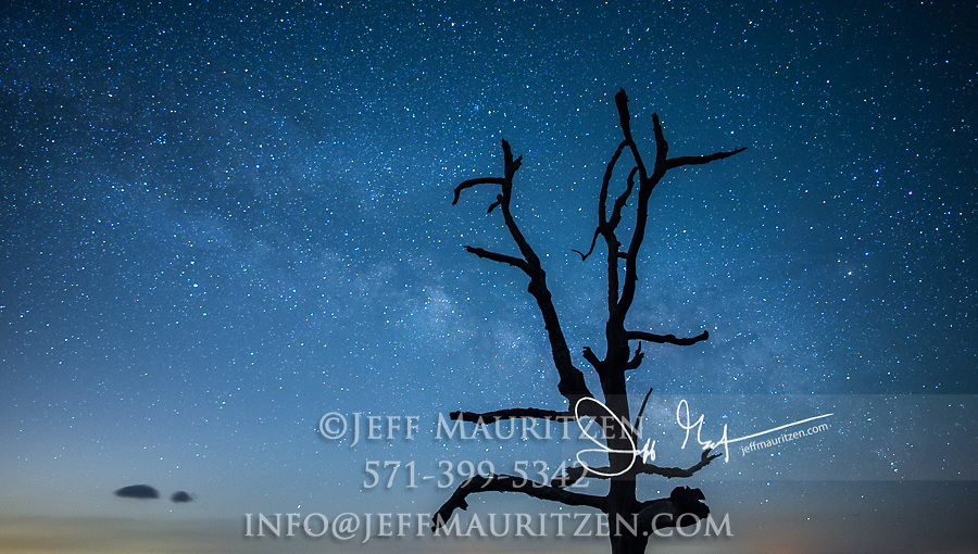 The Milky Way Galaxy rises over a lone tree along Skyline Drive, Shenandoah National Park, Virginia.