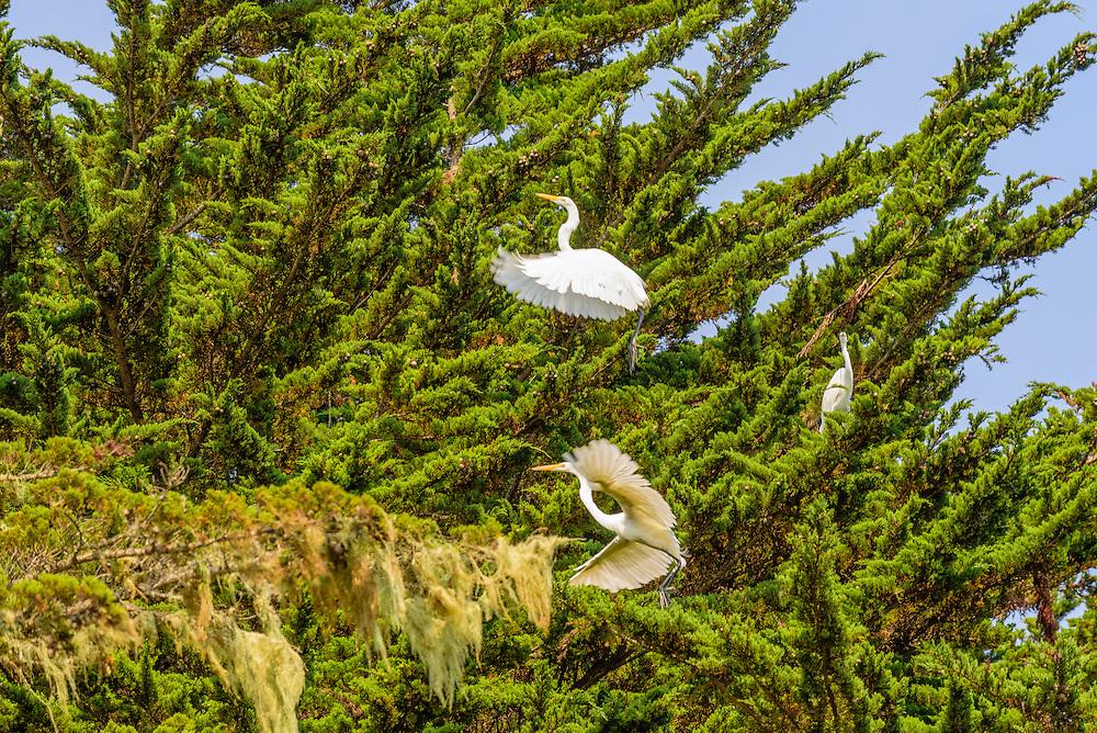 Cypress Grove Preserve, Audubon Canyon Ranch, Tomales Bay, CA