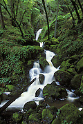 Cataract Falls<br /> Mount Tamalpais State Park, California
