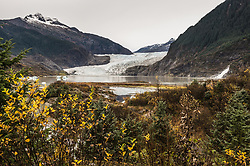 The Mendenhall Glacier runs roughly 12 miles, originating in the Juneau Icefield, near Juneau, Alaska. This photo of the glacier was taken on the Trail of Time. The glacier is located 12 miles from downtown Juneau. Each year, 465,000 curise ship passengers visit the Mendenhall Glacier.
