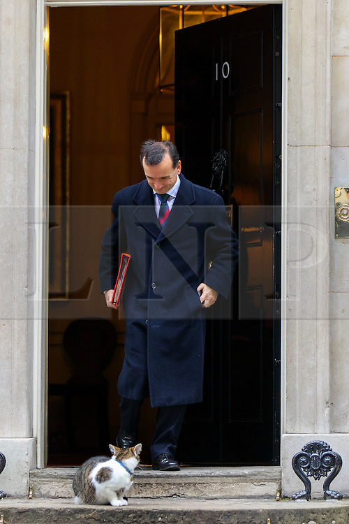 © Licensed to London News Pictures. 15/11/2016. London, UK. Secretary of Wales ALUN CAIRNS sees Larry the Downing Street cat waiting outside whilst a cabinet meeting takes place in Downing Street on Tuesday, 15 November 2016. Photo credit: Tolga Akmen/LNP