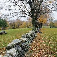 A stone fence and almost bare maple trees in the fall, Connecticut, USA