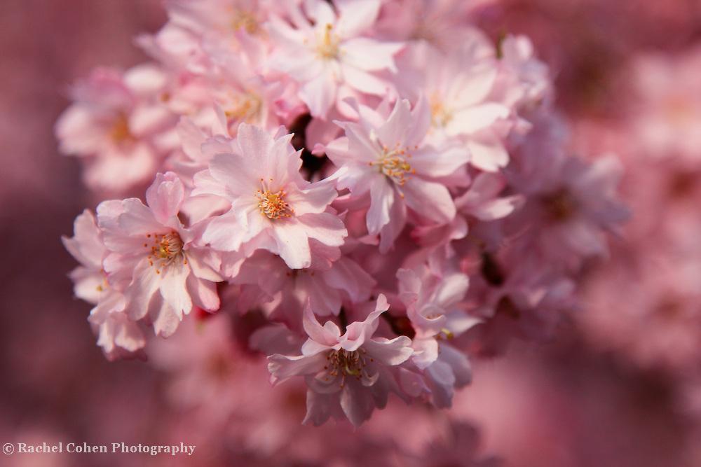 &quot;Truly Delightful&quot; 2<br /> <br /> Flowers by Rachel Cohen