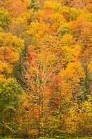 Fall Foliage on Hillside, Hancock, Vermont