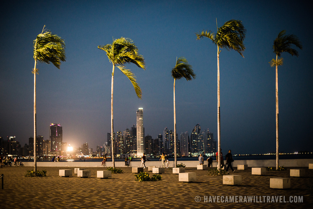 Tall palm trees stand upright on the renovated waterfront of Panama City, Panama, on Panama Bay, with the lights of Punta Paitilla in the background.