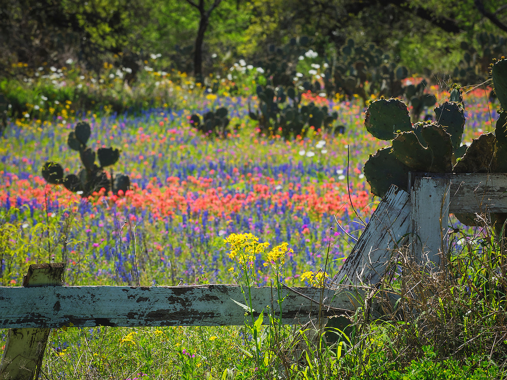Spring blooms come to the hill country south of San Antonio.