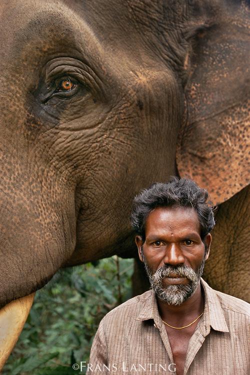 Domestic asiatic elephant with Mahout, Mudumalai Wildlife, Sanctuary, Western Ghats, India