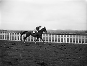 """27/01/1962<br /> 01/27/1962<br /> 27 January 1962<br /> Horse Racing - Celbridge Handicap Steeplechase at Naas. """"Cantina"""", with T. Kinane up."""