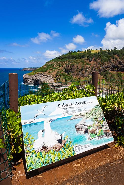 Kilauea Point National Wildlife Refuge, Kilauea, Island of Kauai, Hawaii USA