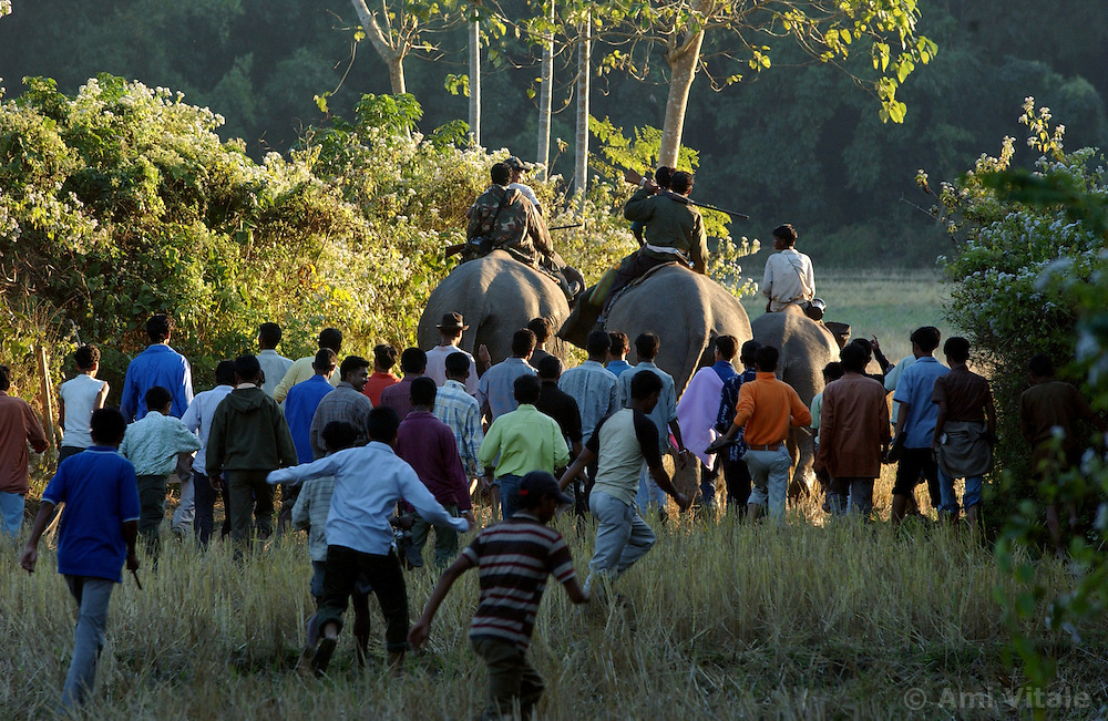Hundreds, perhaps thousands of villagers, forest rangers, police and wildlife experts attempt to drive a herd of elephants from a village on the outskirts of Tezpur, Assam in Eastern India December 22, 2003.  India and its sacred elephants are threatened by poaching, deforestation and encroachment of the reserved land and natural forests.  As a result of the loss of land, wild elephants are rampaging through villages, killing people and destroying their homes and crops. During this drive, a baby elephant, only days old was seperating from his mother and faces probable death without her. He is now at a rescue center in Kaziranga. (Ami Vitale)