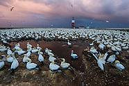 Bird Island MPA