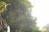 Spiders web in the sunlight