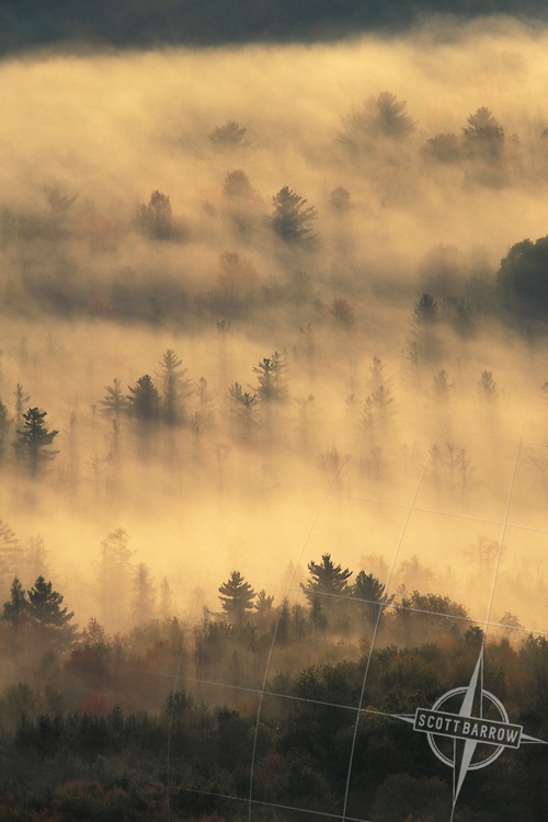 Forest in morning fog from above.