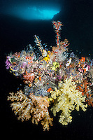 Soft Corals flourish beneath the opening of a reef cavern.<br /> <br /> Shot in Indonesia