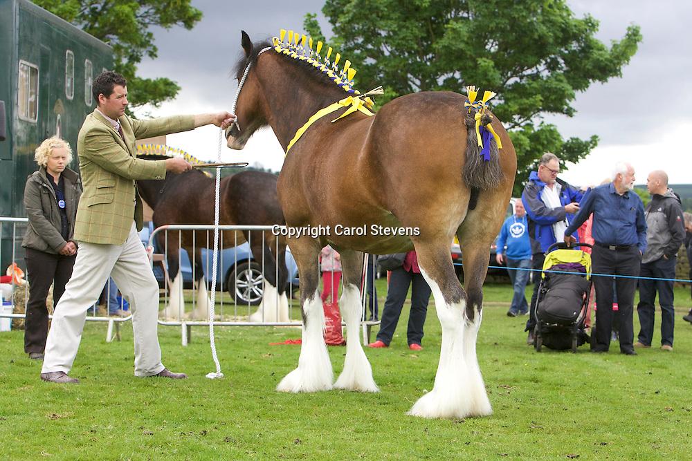 Philip Woof's Marieth Maizie (s Marieth Major) with foal Marieth Maverick (s  Red Brae Mascot)