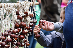 © Licensed to London News Pictures. 01/10/2017. London, UK. People take part in the 16th annual Conker Championships on Hampstead Heath.  The childhood tradition of collecting the fruit of the horse chestnut tree is kept alive for young and old alike. Photo credit : Stephen Chung/LNP