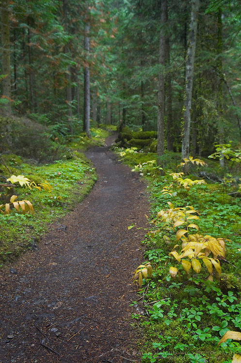 Berg Lake Trail, Mount Robson Provincial Park