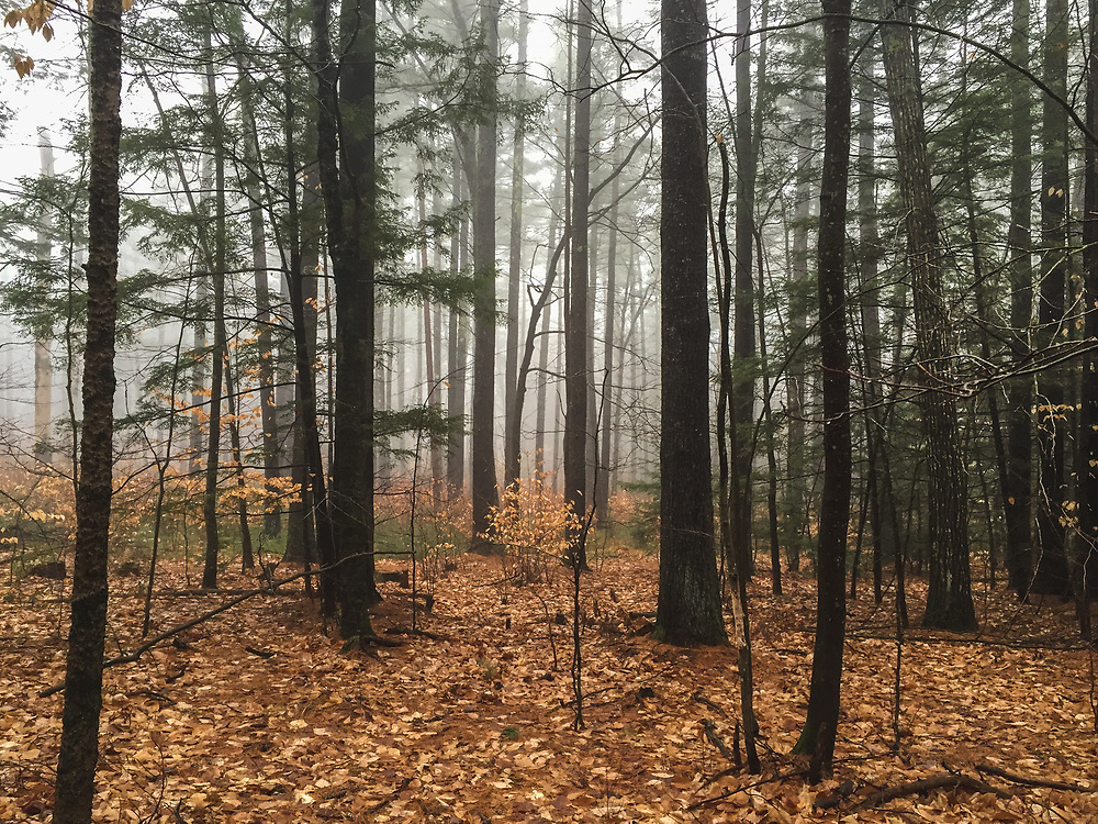 A foggy fall day on a hike at Castle In the Clouds in Moultonborough, New Hampshire