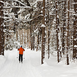 A man cross country skiing at the Notchview Reservation in Windsor, Massachusetts. The Trustees of Reservations.