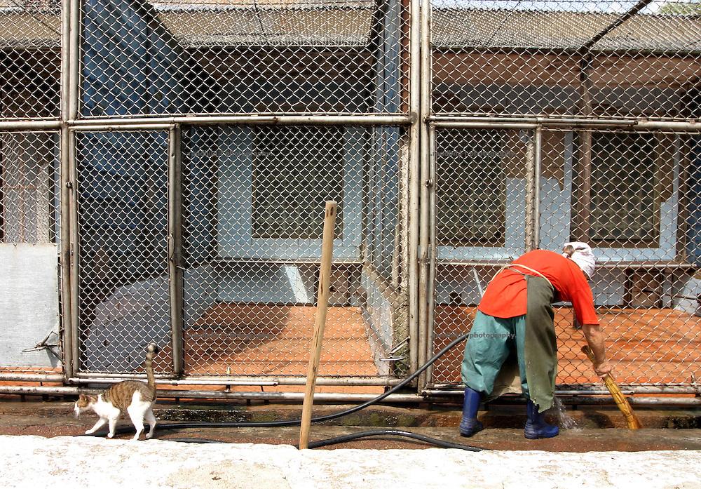 Georgien/Abchasien, Suchumi, 2006-08-25, Eine Katze schleift um eine Putzfrau mit Wasserschlauch herum. Das Affeninstitut in Suchumi war in der Sowjetzeit ein grosses Forschungsinstitut. Hier wurde u.a. am Rhesusaffen geforscht. Im Krieg wurde das Institut stark beschädigt und viele Tiere befreiten sich. Heute sind die verbliebenen Affen eine Touristenattraktion. Abchasien erklärte sich 1992 unabhängig von Georgien. Nach einem einjährigen blutigen Krieg zwischen den Abchasen und Georgiern besteht seit 1994 ein brüchiger Waffenstillstand, der von einer UNO-Beobachtermission unter personeller Beteiligung Deutschlands überwacht wird. Trotzdem gibt es, vor allem im Kodorital immer wieder bewaffnete Auseinandersetzungen zwischen den Armee der Länder sowie irregulären Kämpfern. (A cat is sneaking around a cleaning woman with a watertube in her hand. The Monkey institut of Suchumi was a famous institution of science. The Rhesus monkey was one of the main tasks. DUring the war the institut became badly damaged and many apes fleed. Today the residual monkeys become a attraction for tourists. Abkhazia declared itself independent from Georgia in 1992. After a bloody civil war a UNO mission observing the ceasefire line between Georgia and Abkhazia since 1994. Nevertheless nearly every day armed incidents take place in the Kodori gorge between the both armys and unregular fighters)