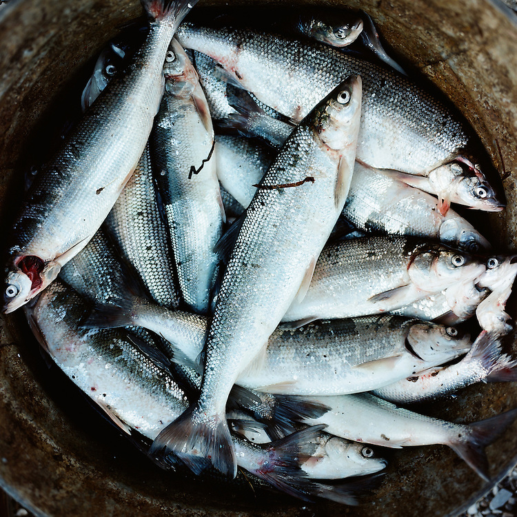 &quot;We eat them dried, half-boiled, and frozen,&quot; says Nick Topkok.<br />