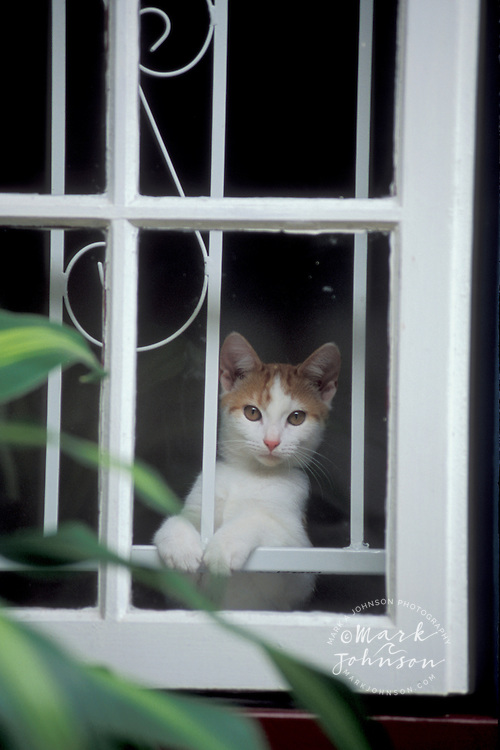 Kitten looking out of window