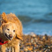 Images of Quincey on Littlehampton beach