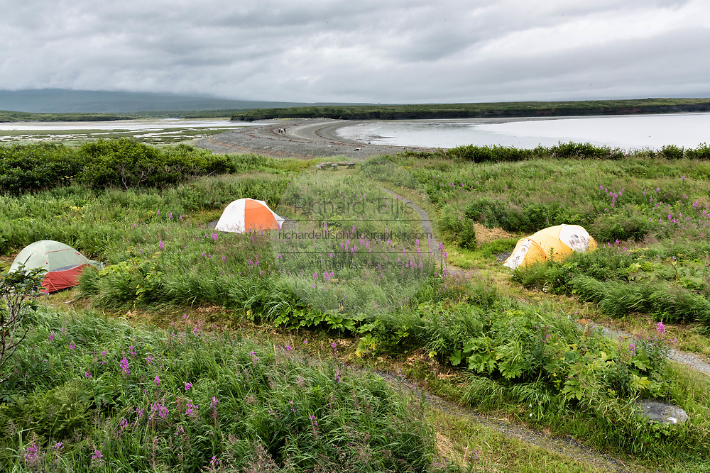 Tents set among wildflowers inside the campground at the McNeil River State Game Sanctuary on the Kenai Peninsula, Alaska. The remote site is accessed only with a special permit and is the world's largest seasonal population of brown bears in their natural environment.