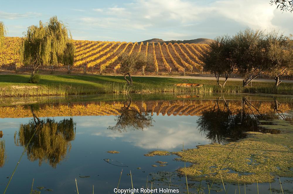 Vineyards at Clos Pepe, Santa Rita Hills, California
