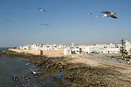 Essaouira with medina walls and seagulls