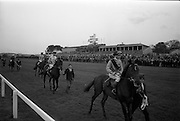 08/05/1965<br /> 05/08/1965<br /> 08 May 1965<br /> The 1965 Gold Flake Meeting at Leopardstown Racecourse, Co. Dublin. Image shows the parade before the Wills Gold Flake Stakes race, Horses are from right: &quot;Tullywhisker&quot; (owned J.P. Herdman, trained: Weld); &quot;Sparrow Hawk (owned: J.E. Ryan, trained: J.M. Rogers, with M. Kennedy up); &quot;Donato&quot; (owned: Countess de la Valdene, trained: V. O'Brien, with J.M. Purtell up) and &quot;Queen's Messenger&quot; (owned: J.C. Brady, trained: Weld, with R.F. Parnell up).