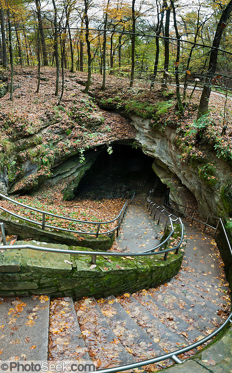 Stairs descend the Historic Entrance of Mammoth Cave, surrounded by trees with yellowing fall leaves. Mammoth Cave National Park was established in 1941 in Edmonson County, Kentucky, USA and was declared a UNESCO World Heritage Site in 1981 and international Biosphere Reserve in 1990. With over 390 miles (630 km) of passageways, the Mammoth-Flint Ridge Cave System is the longest known in the world. Mammoth Cave developed in thick Mississippian-aged limestone strata capped by a layer of Big Clifty Sandstone. Descending limestone layers include the Girkin Formation, Saint Genevieve Limestone, and Saint Louis Limestone. Panorama stitched from 6 overlapping photos.