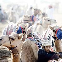 Dubai - United Arabs Emirates - 23 November 2008 ..Robot controled camel race in Dubai...Photo: EZEQUIEL SCAGNETTI.