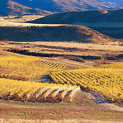 Vineyards, Wanaka, Cromwell, Central Otago, New Zealand, Amisfield, Quest Farm, Red Tussock