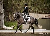 Horse No 34