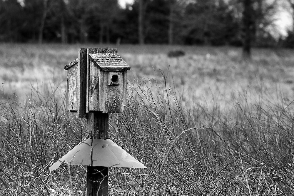 This bird feeder is sitting by itself in a field.  The mandatory squirrel cone has the number 12 painted on it.  Leaving this in plain black and white gives much more of a feeling of stark and cold.