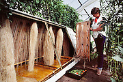 USA_SCI_BIOSPH_67_xs <br /> Biosphere 2 Project undertaken by Space Biosphere Ventures, a private ecological research firm funded by Edward P. Bass of Texas.  Hydroponic vegetable  research for Biosphere 2.  The experiment shown here was not used inside Biosphere 2.  Biosphere 2 was a privately funded experiment, designed to investigate the way in which humans interact with a small self-sufficient ecological environment, and to look at possibilities for future planetary colonization. The $30 million Biosphere covers 2.5 acres near Tucson, Arizona, and was entirely self- contained. The eight 'Biospherian's' shared their air- and water-tight world with 3,800 species of plant and animal life. The project had problems with oxygen levels and food supply, and has been criticized over its scientific validity. 1986