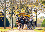 © Licensed to London News Pictures. 31/10/2014. Hampton, UK. Shire horses pull a tourist bus around the palace.  People enjoy the warm weather at Hampton Court Palace today 31st October 2014. forecasters are predicting It could be the warmest halloween on record. Photo credit : Stephen Simpson/LNP