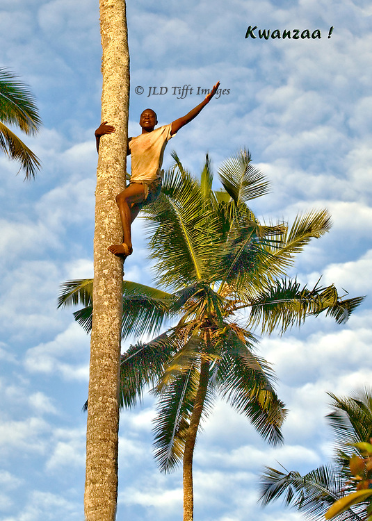 Young African, in Zanzibar, the Spice Island, waves enthusiastically from near the top of the tall palm tree which he is climbing.  Blue sky with a layer of puffy white clouds set him off.