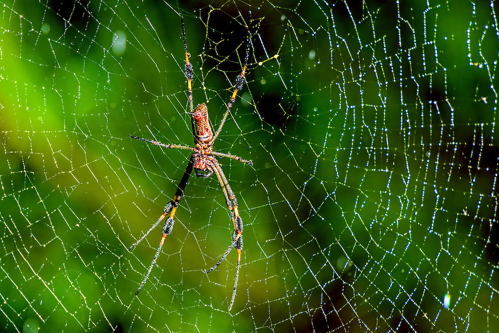 Arachnoid - Spider on its web in Costa Rica