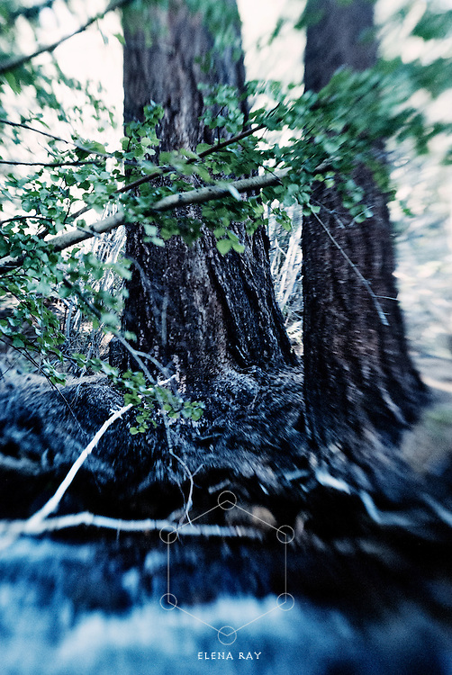 Emotive waters and potent trees.