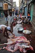 A man butchers a cow on the street in Dhaka, Bangladesh. Bangladesh has the world's fourth largest Muslim population, and during the three days of Eid al-Adha, the Festival of Sacrifice, Dhaka's streets run red with the blood of thousands of butchered cattle. The feast comes at the conclusion of the Hajj, the annual Islamic pilgrimage to Mecca. In both the Koran and the Bible, God told the prophet Ibrahim (Abraham) to sacrifice his son to show supreme obedience to Allah (God). At the last moment, his son was spared and Ibrahim was allowed to sacrifice a ram instead. In Dhaka, as in the rest of the Muslim world, Eid al- Adha commemorates this tale, and the meat of the sacrificed animals is distributed to relatives, friends, and the poor.