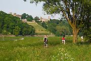 Elbeufer, Elbwiesen, Fahrradweg an der Elbe, Elbschloesser,  Dresden, Sachsen, Deutschland.|.Dresden, Germany,  river Elbe shore, Elbe castles