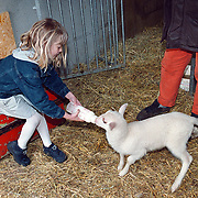 Jonge dieren geboren op de kinderboerderij, Linda geeft een lammetje een flesje