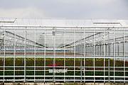 In Bleiswijk werkt een vrouw in een van de vele bloemenkassen.<br /> <br /> In Bleiswijk a woman works in one of the many greenhouses for flowers.