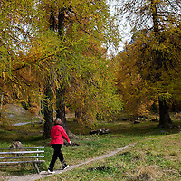 BOLZANO, ITALY - OCTOBER 14:  A woman walks in a wood in Solda that as Autumnal colours appear on October 14, 2010 in Bolzano, Italy. Italy is currently enjoying the final warm spells of the summer, however, the shortening daylight hours and cooler weather is bringing Autumn foliage colours across the country.
