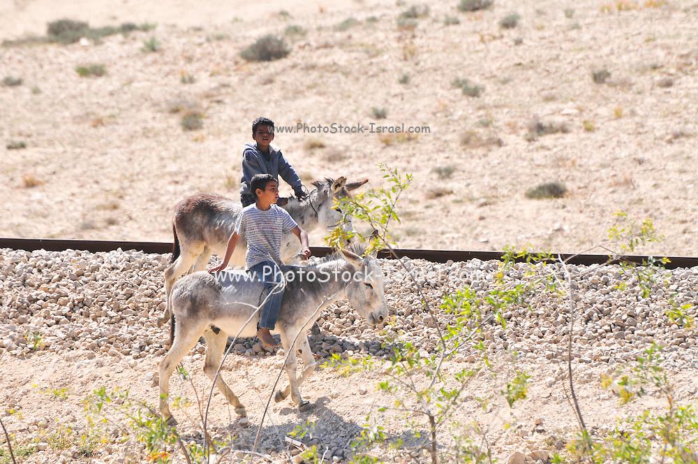 Bedouin boys riding donkeys Photographed in the Negev Desert, Israel